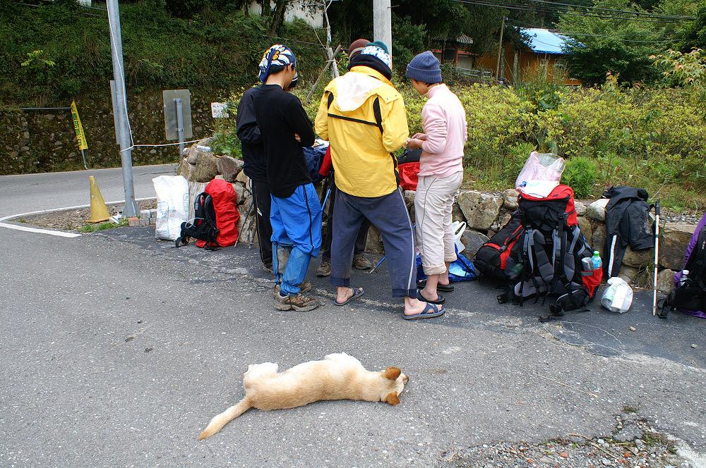 南湖大山day5-116 小狗跑來湊熱鬧