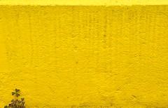 clover (Heidelknips) Tags: yellow wall minimal gelb heidelberg clover klee d90 resizedonly bordsteinkante teppichfrick