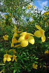 Yellow Flowers (Colin Roohan) Tags: bird kids youth palms children boats monkey interestingness mms asia paradise all candy market coconut no or © markets sunsets vietnam national jungle rights planes beaches sharing monkeys snacks written airports whitesand without usage saigon hochiminhcity reserved geographic bats permission dragonfruit phuquoc including harvesting allowed copying duongdong baisao oddsnacks