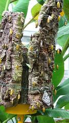 Cocoons (Pai Abu) Tags: cocoon taipeizoo