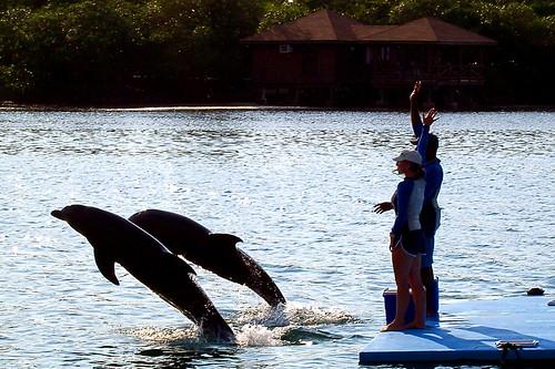 Dolphins Show - Roatan, Honduras
