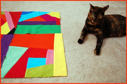 what is it about cats and quilts?