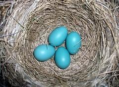 Eggs_5510