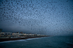 brightons starlings (lomokev) Tags: blue sea nature birds canon eos lights pier brighton dusk starling 5d starlings brightonpier palacepier swam canoneos5d deletetag file:name=mg2874 image:selection=tn