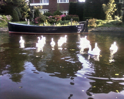 Shiny swans
