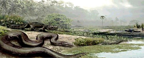 60 millones de años atrás se bailaba así