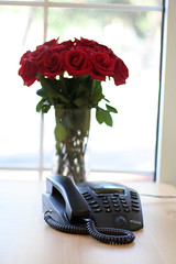 Roses Are Red (ZURBinc) Tags: flowers red roses work design office phone smell bayarea workplace siliconvalley campbell interaction techie bloodred zurb communicationhappy