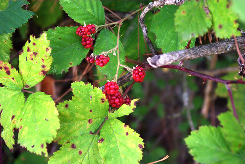 blackberry, pentax k10d