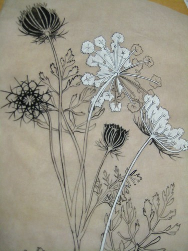 queen anne's lace drawing · original drawing for tattoo