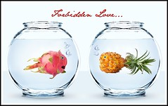 ...when a Pitaya meets a Pineapple... (RR) Tags: pink food fish plant playing silly art love water frutas yellow fruit with humor bowl romance forbidden exotic relationship pineapple tropical p unusual fishes ananas aqurio dragonfruit abacaxi pitahaya anthropomorphic pia playingwithfood pitaya ofa forbiddenlove anthropomorph aquarious antropomrfico othertimes becausesometimes partofthe andyet antropomorfico anthropomorphe yourethepitaya yourethepineapple spreadhumorcoalition brincandocomacomidablog