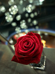 Table Rose (jamalrob) Tags: red rose table restaurant bokeh olympus zuiko e510 1260 circlesofconfusion