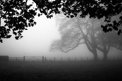 The end of Winter. (Ian McWilliams.) Tags: winter mist tree field fog fence leaf spring gate northumberland elm horsechestnut