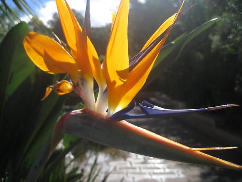 Flowers at Jamberoo