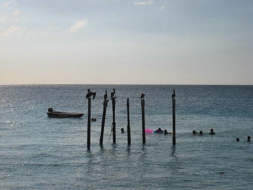 Six poles for five albatross
