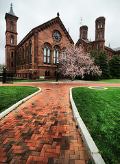 Path to the Smithsonian Castle (` Toshio ') Tags: pink flowers flower tree castle window grass museum washingtondc dc washington petals spring districtofcolumbia branch bright artistic path flag branches bricks blossoms perspective wideangle walkway nationalmall magnolia curb hdr magnolias cherryblossomfestival smithsoniancastle toshio brickpath magnoliablossoms highdynamicresolution platinumheartaward
