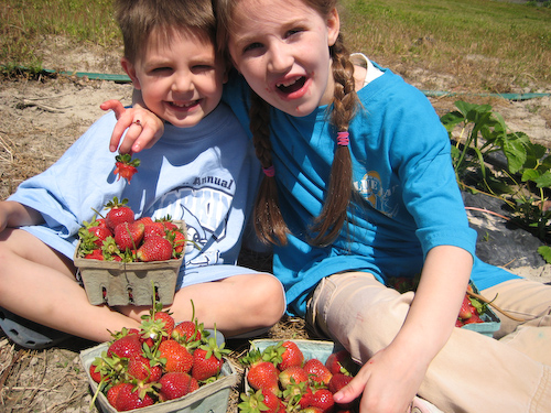 Strawberry Picking-23