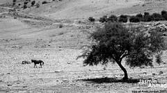 Iraq al-Amir... (Jasmin Ahmad) Tags: iraq jordan phptography  alamir