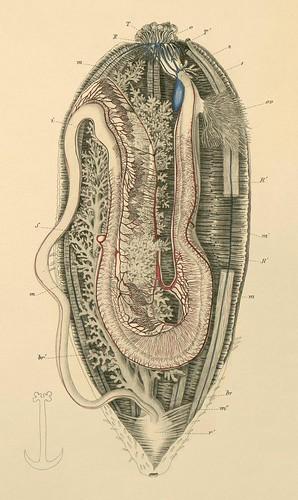 echinodermata b