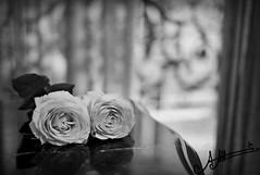 ~  ~ (A.A.A) Tags: leica roses white black love rose by photography heart you bokeh 14 amour m8 iloveyou aaa amna irresistible jetaime abdulaziz althani