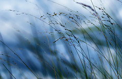 Grasses (Mark-F) Tags: sky grass breeze markf markfreeman sonyalpha300 minoltaaf3570mm