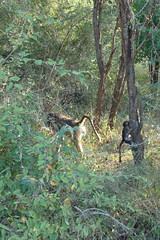 Kruger Park. South Africa. May/2009 (EBoechat) Tags: parque elephant bird animals southafrica monkey buffalo lion safari rhino zebra crocodile com macaco giraffe hippo impala animais bufalo passaro leo girafa krugerpark kruger elefante rinoceronte africadosul hipopotamo crocodilo 200905 nely