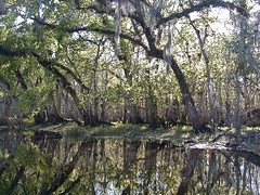 St. Johns River, Florida
