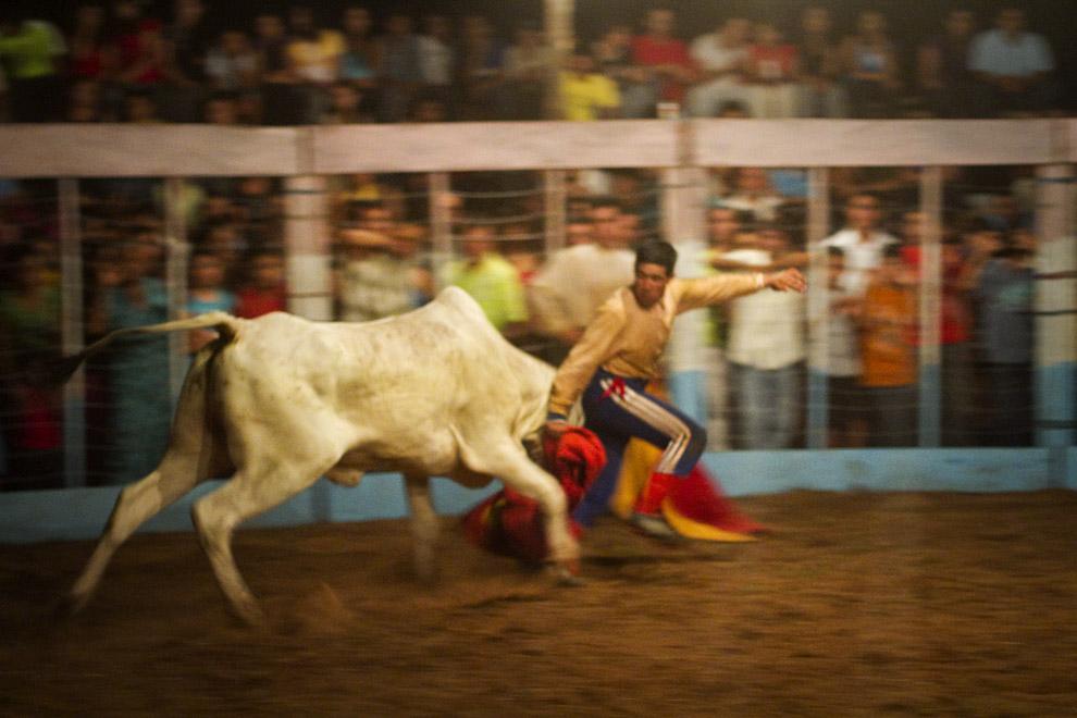 El Torero corre para escapar del toro que lo alcanza. (15 de Agosto, Paraguay - Tetsu Espósito)