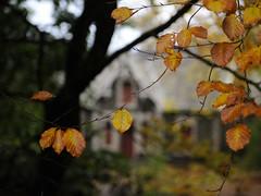Chingford Autumn (Ian@NZFlickr) Tags: autumn fall leaves nz otago dunedin aotearoa stables chingford