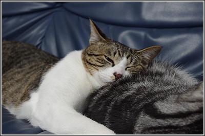 ちょっとバテ気味なので、猫の写真でも