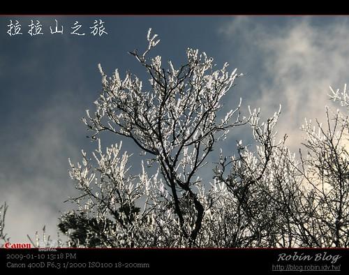你拍攝的 20090110數位攝影_拉拉山外拍414.jpg。