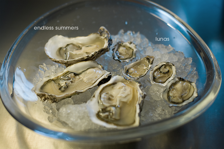 Endless Summer & Luna Oysters
