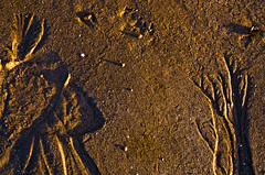 Geronimo et l'Arbre de Vie (Melchior Kahn) Tags: sable erosion elements plage indien theelements geronime