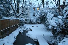 Snow dipped garden