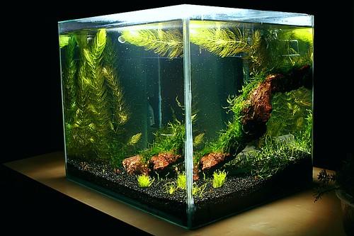 25cm x 25cm x 30cm Shrimp-Cube