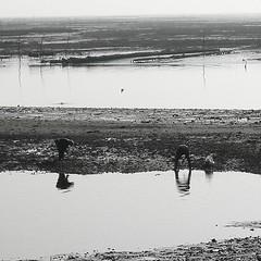 Paysans de la mer (lasab8) Tags: portrait bw white black blanco nature noir negro hommage blanc artisan bassin paysan mtier bigorneau cueillette bej petiteshistoiressansparoles