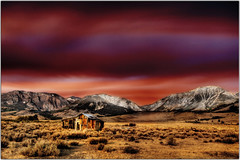 The Little Barn that Could (Extra Medium) Tags: sunset house barn landscape scenery d2x abandonded shack sierranevadas 395 nearmonolake 1shothdrfromraw