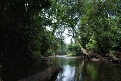 hutan khatulistiwa