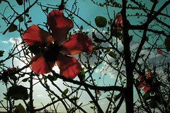 afternoon (Andr Felipe de Medeiros) Tags: sky cloud sunlight flower fleur backlight countryside afternoon flor cu cielo nuvem entardecer emotionalnature luzdosol