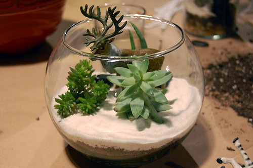 Succulent Terrarium Class by Sew Darn Jenny.