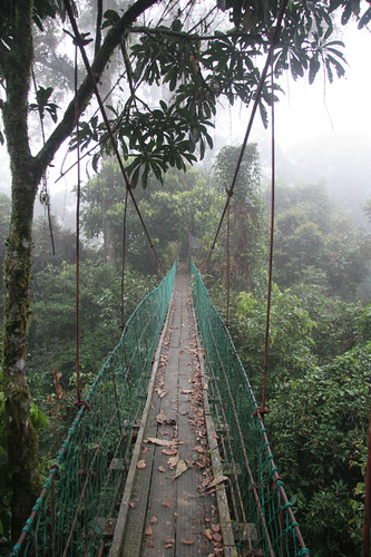 Canopy walk at Borneo Rainforest Lodge