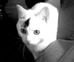 Dans l'escalier... (__AK__) Tags: chat lumire mimo yeux moustaches noiretblans
