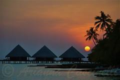 Maldive,atollo di Male Sud (ariannacascinelli) Tags: world sunset club sunrise wonderful island nikon paradise tramonto alba sunsets romantic nights sunrises romantico aereo isola crepuscolo naturalmente d90