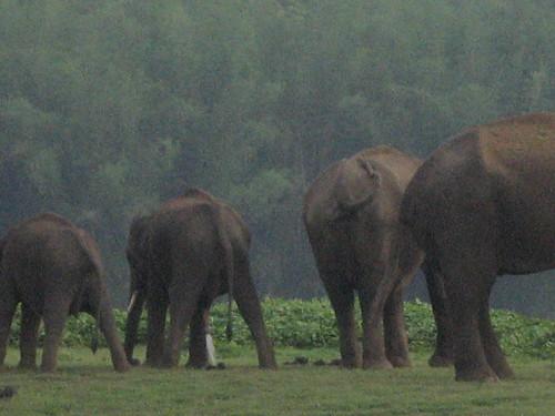 Stop disturbing us... you humans! by rednivaram.