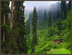 Tranquility (IshtiaQ Ahmed (is Back)) Tags: pakistan green locals hut jungle waterfalls northernareas kaghanvalley shogran nwfp jeepsafari landslides lovepakistan ishtiaq vosplusbellesphotos mannameadows shinkyarihutt ghanool