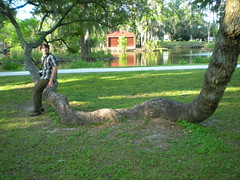 DSCN0504 (anneisanartist) Tags: park vacation boyfriend neworleans coolpix artmuseum hugetree