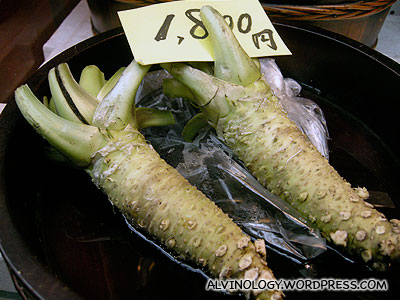 This is what a wasabi plant looks like