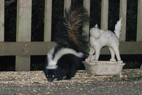 skunk & cat
