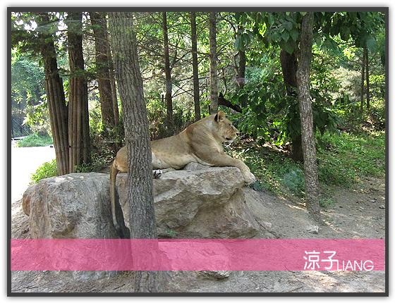 愛寶樂園(動物篇)07