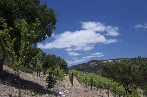 The view from the orchard to the Lower Vineyards which are Grenache and Mourvedre.