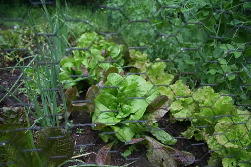 dad's garden 10